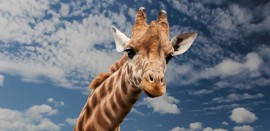 animal-close-up-clouds-39504